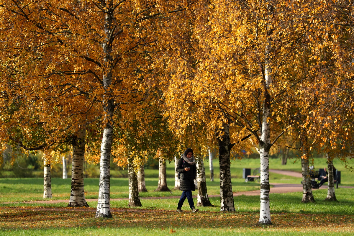 People walk around birch trees in a park in St Petersburg.