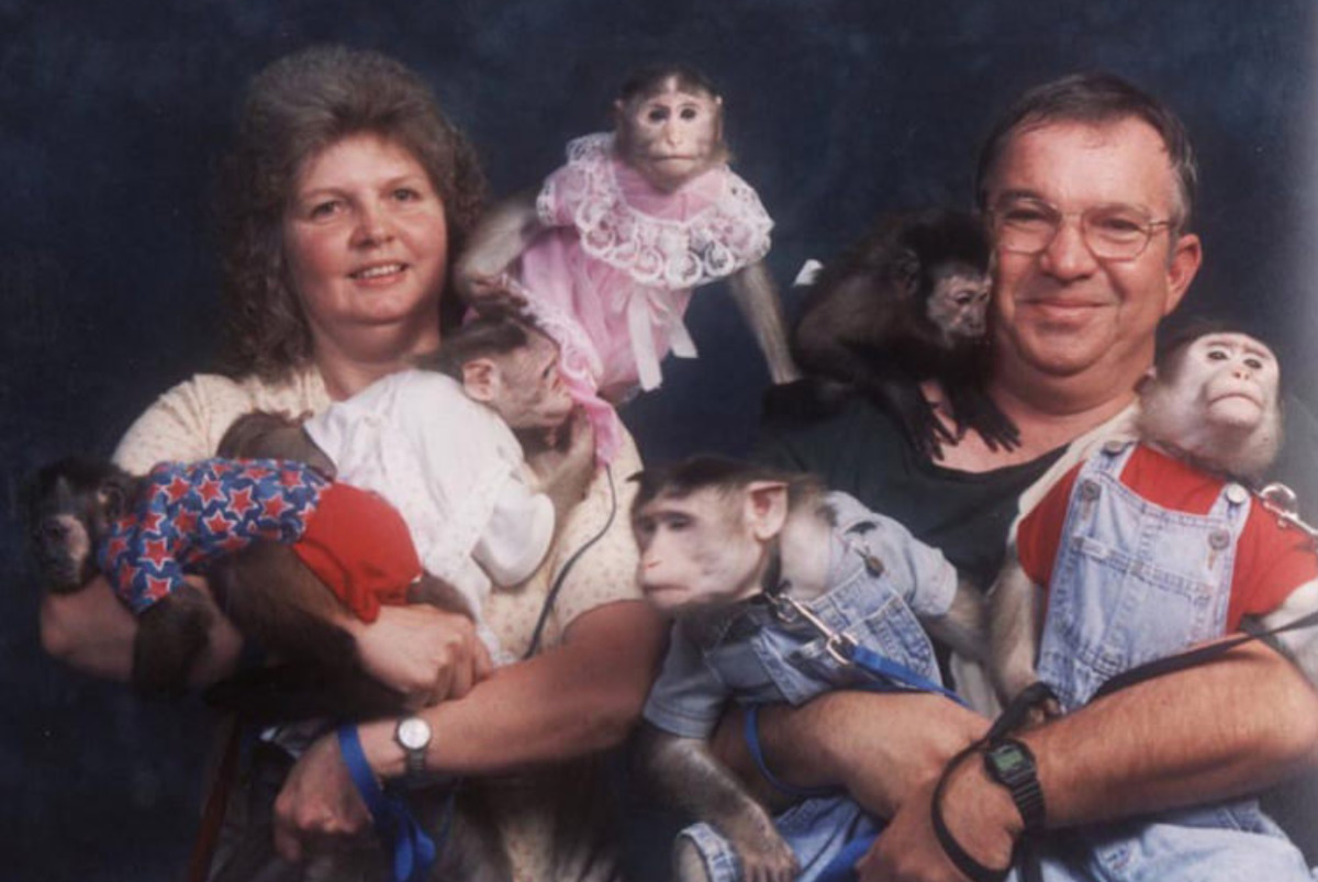 photo has multiple monkeys dressed in human clothes with couple