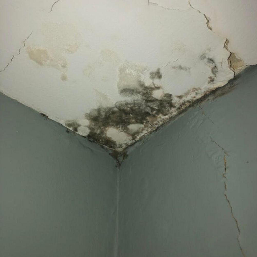 black mold in the ceiling