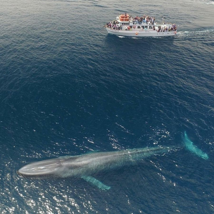 75 foot boat sailing beside blue whale