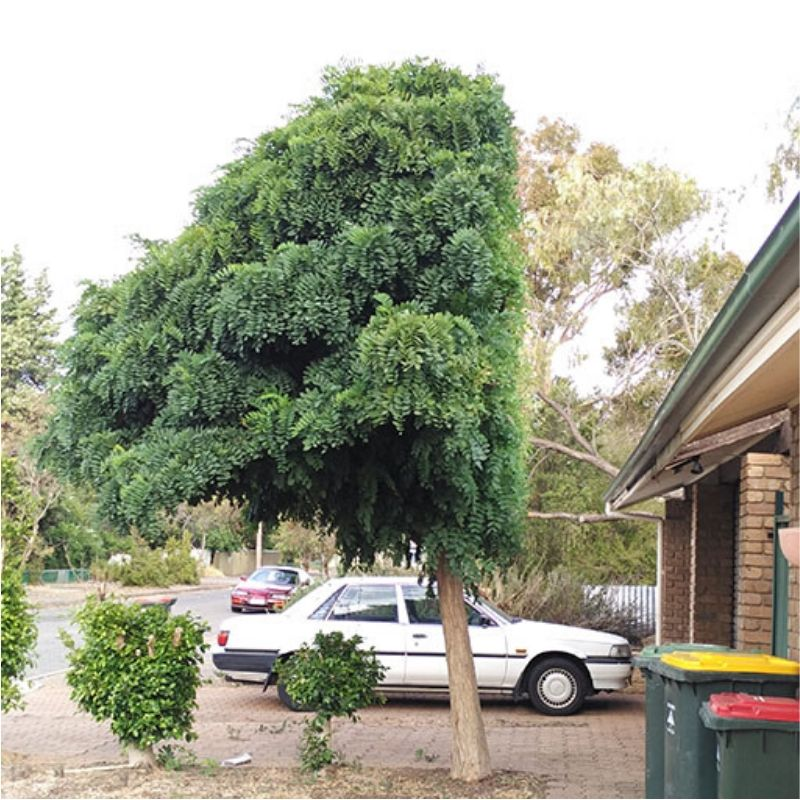 half a tree because of the landlord
