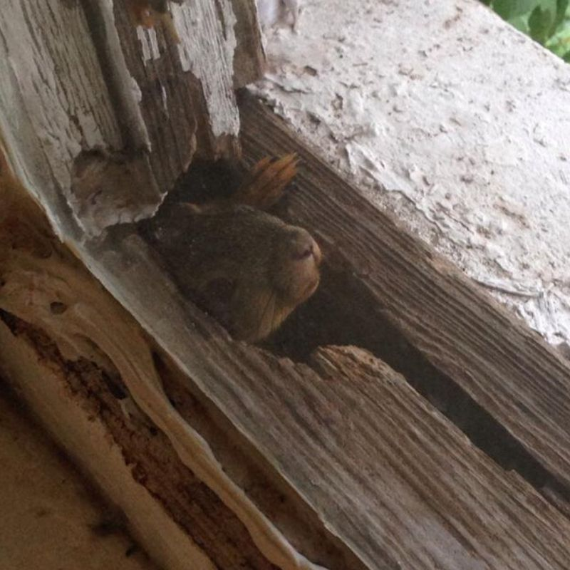 new roommate squirrel