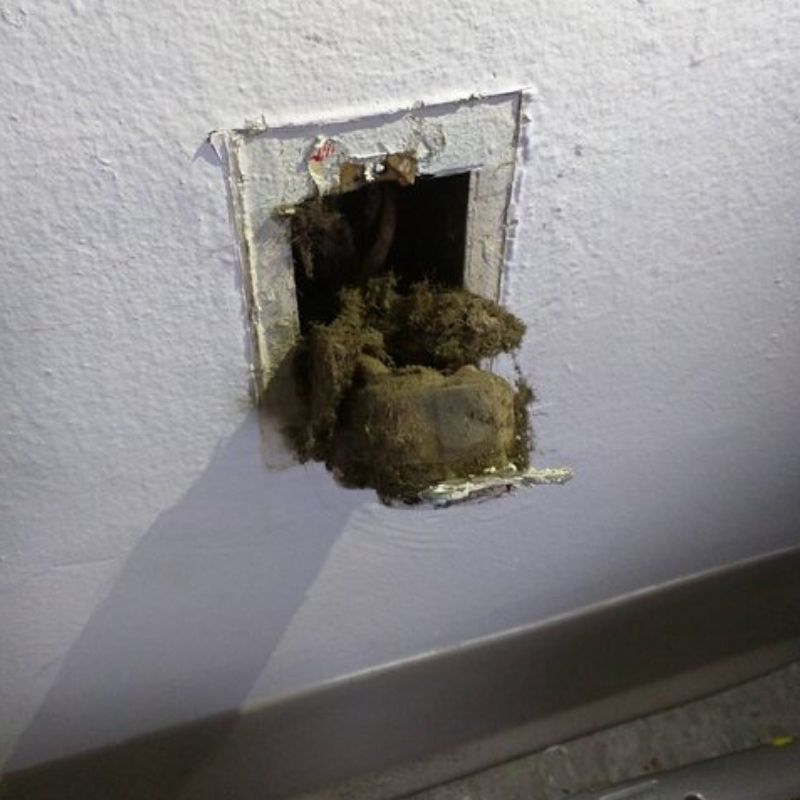sparking outlet turns out to be moldy inslation