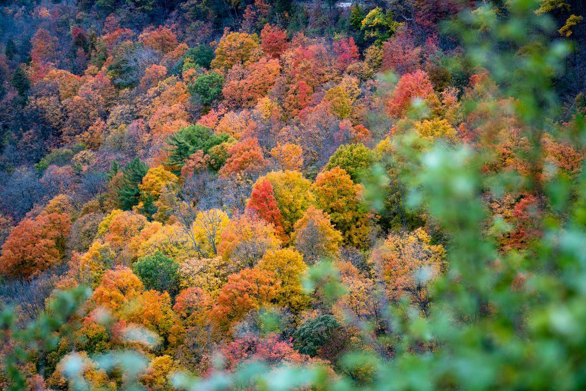 Colorful trees fill the valley of Dundas Peak.