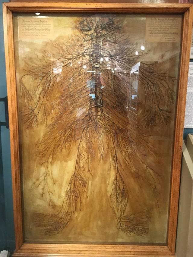 intact human nervous system